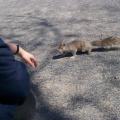 Kanada -- Sehr zutrauliches Hörnchen...