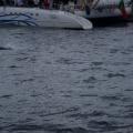Madeira -- Delfin-Beobachtung