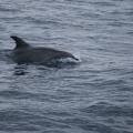 Madeira -- Delfin
