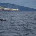 Madeira -- Delfine