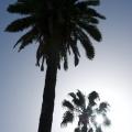 Gran Canaria -- Palmen in Las Palmas…