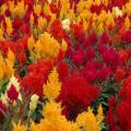 Vancouver Island - Victoria -- Blumenmeer