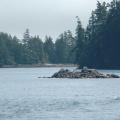 Vancouver Island - Wildlife Tour -- Kleine Inseln