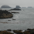 Vancouver Island - Ucluelet -- Wild Pacific Trail