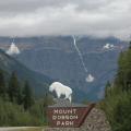 Mount Robson -- Höchster Gipfel der Rockies in den Wolken