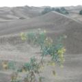 Gran Canaria -- Dünen