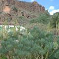 Gran Canaria -- Fahrt ins Inselinnere - Temisas