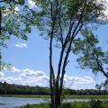 Mersey River -- Landschaft