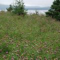 Cape Breton Island -- Landschaft