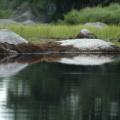Mersey River -- Kanutour am Morgen