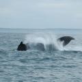 Digby Neck -- Whale Watching - Platsch!!!
