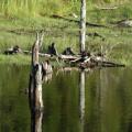 Fundy National Park -- Landschaft