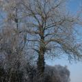 Winterstimmung -- Baum