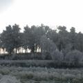 Winterstimmung -- Landschaft